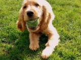 hondenpension tilburg