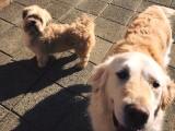 Betrouwbaar hondenpension